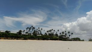 Palmeras - Palm trees